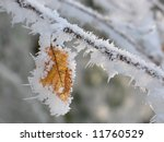 Frozen leaf on tree branch closeup - stock photo