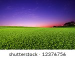 Perfect Golf Field with Cut Green Grass and sunset in the background - stock photo