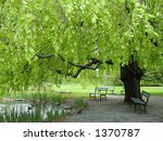 Bench under green leafy canopy in park - stock photo