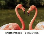 Flamingo love - stock photo