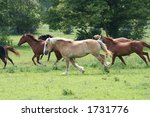Running in Pasture - stock photo