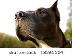 Dog sense of smell - stock photo