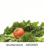 Lettuce and tomato - stock photo