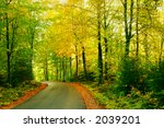 Autumn road through a beech forest - stock photo