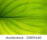 detail of a leaf - stock photo