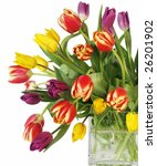 beautiful bouquet of tulips in square vase with clipping path - stock photo