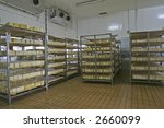 cheese in cold storage in modern dairy - stock photo