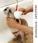dog getting bath - stock photo