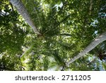 trees and palm (horizontal) - stock photo