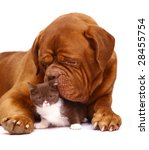Dog and kitten. - stock photo