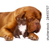 Dog and kitten on a white background. - stock photo