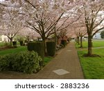 Flowering Park - stock photo