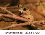 Close up to see Toad - stock photo