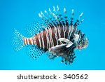 Strange tropical fish - stock photo