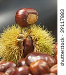 spiky chestnut case with tasty kernel balanced on top - stock photo