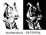 Black and white tiger.  vector - stock vector