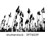 Cane field against white (vector, illustration) - stock vector
