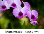 Vibrant purple tropical orchid flower - stock photo