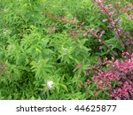 Pink, green and white foliage, suitable as background. - stock photo