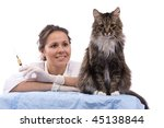 Pretty vet with syringe is looking at the feline subject.  Veterinarian have a  medical examination a cat. White background. - stock photo
