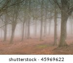 Fog and early morning - peaceful and natural - stock photo