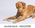 Dog lying at full food bowl - stock photo