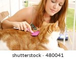 Woman grooming cat - stock photo