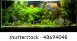A beautiful planted tropical freshwater aquarium with Discus Fish. - stock photo