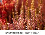 Detail of pink heath - heather - in bloom - Calluna vulgaris - stock photo