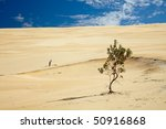 Last tree in a place of forest - stock photo
