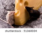 Mouse vs. cheese - stock photo