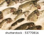 Fresh fish in a fishery - stock photo