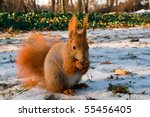Red squirrel in the natural environment - stock photo
