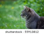 cat on green grass watching carefully for birds to kill - stock photo