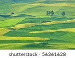 Beautiful rolling hills and patterns in the grain fields of the Palouse in Washington state, early summer.  The different shades are from the different crops of barley, wheat, and lentils. - stock photo