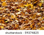 Autum leaves - stock photo