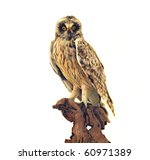 A mounted display of a taxidermy of an owl on a tree - stock photo
