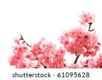 Japanese cherry blossom - stock photo