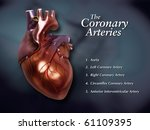 Coronary Arteries Labeled - stock photo