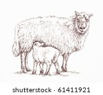 Pen and ink sketch of a sheep with feeding lamb. - stock photo