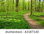 Path in forest with vidi colors in spring - stock photo
