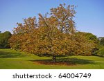 spreading chestnut tree - stock photo