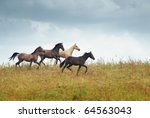 Four horses running in the steppe. Kazakhstan. Middle Asia. Natural light and colors - stock photo