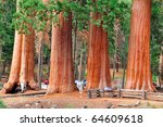 sequoia national Park - stock photo