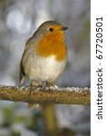 christmas robin sat on snowy perch - stock photo