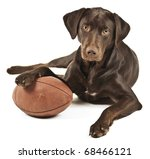 Dog resting his paw on American football. Photo isolated on white background. - stock photo