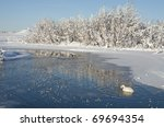 Swan and Lake in winter in Iceland - stock photo