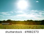 large truck lost in sunflowers - stock photo