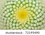Green cactus and yellow prickles (very largly). - stock photo