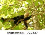 monkey looking high - stock photo